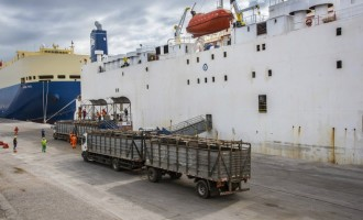 Exportação de gado vivo avança e mira novos mercados