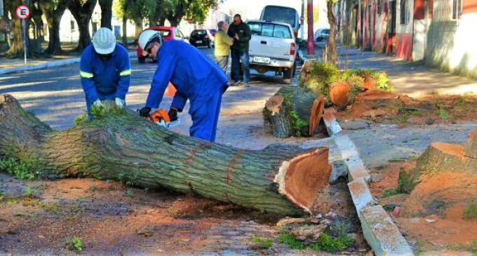 Supressão e poda de árvores podem ser pedidas à Ouvidoria da Prefeitura