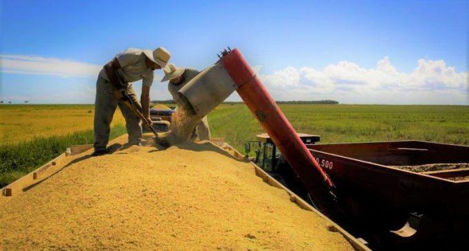COLHEITA DO ARROZ : Importância da mecanização para rentabilidade da produção rural
