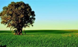 Plantio do trigo se intensifica no RS, com 55% da área prevista já semeada