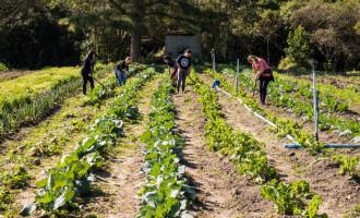 EDUCAÇÃO : Turno integral e iniciação agrícola na zona rural