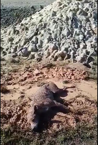 Tutu, no dia em que foi encontrado quase sem vida