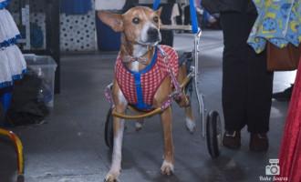 Mobilização para tratamento de cão atropelado na BR 116