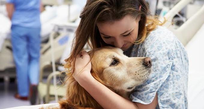 PROJETO DE LEI MUNICIPAL : Pacientes hospitalizados podem receber visitas de animais