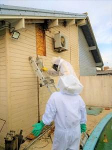 A CONDUÇÃO correta das abelhas protege a população e o meio ambiente