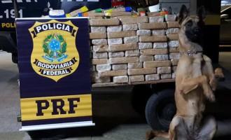 POLÍCIA RODOVIÁRIA : Cresce em 73% no RS a apreensão de cocaína