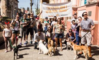 PROTEÇÃO ANIMAL : Cãominhada integra 2ª Semana