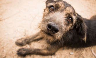 Canil Municipal tem 60 cães à espera de um lar