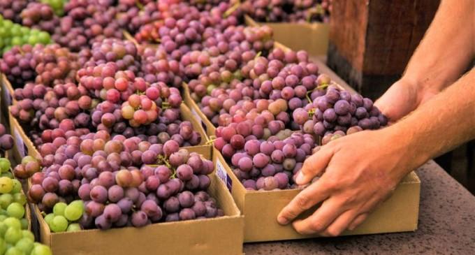 """EM FEVEREIRO : Feira Municipal """"Uvas de Pelotas"""" ocorrerá em diversos pontos da cidade"""