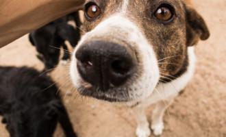 Canil Municipal tem 56 cães disponíveis para adoção responsável