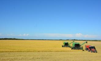 O que justifica a alta produtividade de arroz no Sul do Brasil?