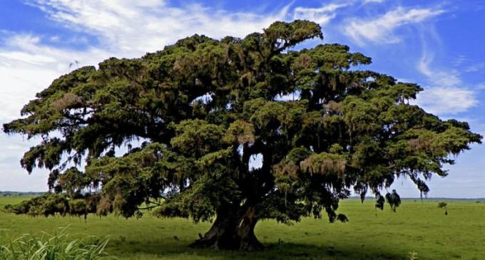 Junho Ambiental apresenta poemas sobre a mata nativa