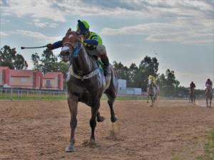 Valette, montado por A. Renan, na vitória do 5º páreo Foto: Álvaro Guimarães / Jockey Club