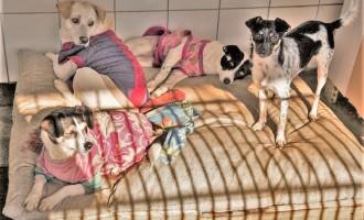 Campanha do Agasalho Canino arrecada roupas para o Canil Municipal