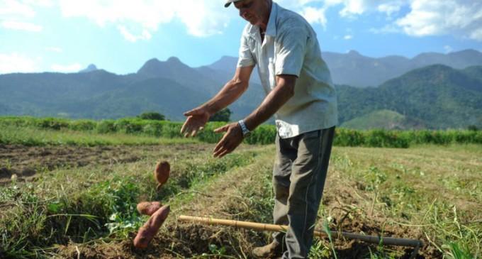 Limites de crédito para produtores rurais são elevados