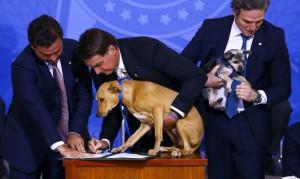 O presidente Jair Bolsonaro sanciona o projeto de lei (PL 1.095/2019) que aumenta pena para crimes de maus-tratos a animais.