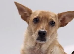 Cão virou estrela de peça publicitária do Banco Central