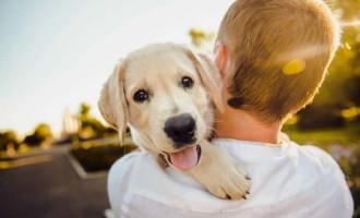 MEU AMIGO PET : Coluna com temas do mundo animal retorna ao Diário da Manhã