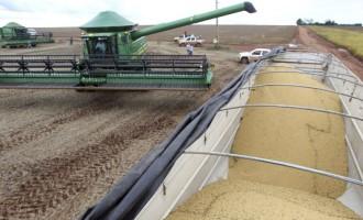 Safra de grãos deve ser 4,2% superior à produção de 2019