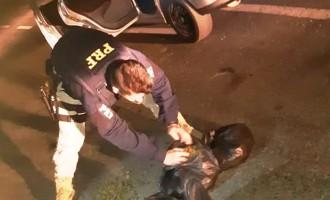"POLÍCIA RODOVIÁRIA :  Casal é flagrado com ""Skunk"""