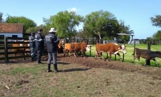 PROGRAMA SENTINELA    : Fiscalizados cerca de 15 mil animais em dois meses nos municípios de fronteira