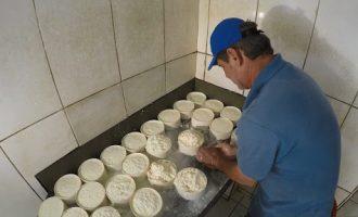 Projeto regulariza produção de  queijos artesanais