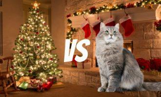 MEU AMIGO PET :  Gatos x Árvore de Natal
