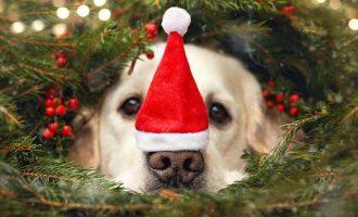 MEU AMIGO PET :   Natal Pet
