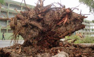 Força-tarefa atua para reduzir transtornos do temporal