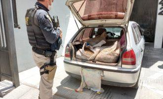 PRF apreende quase meia tonelada de camarão transportado sem refrigeração
