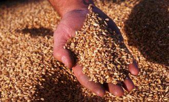 IBGE  : Safra de grãos deve ser recorde
