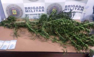BRIGADA  : Plantio de maconha no Porto