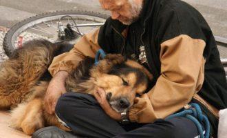 Aprovado o projeto que permite animais em abrigos para moradores de rua de Pelotas
