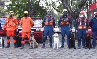 BOMBEIROS DESAPARECIDOS : Cães de Santa Catarina auxiliam nas ações de resgate